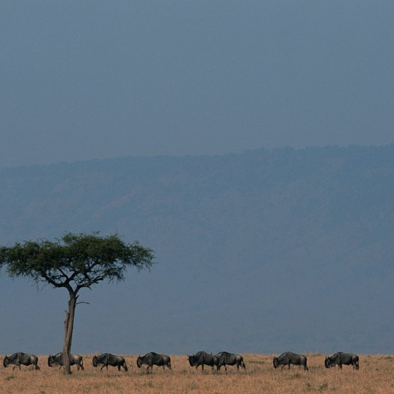 The grassy savannas of eastern Kenya give way to mountains and deserts.