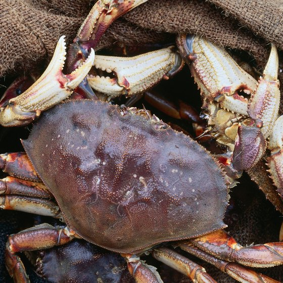 Dungeness crab are abundant in the waters surrounding Sequim.