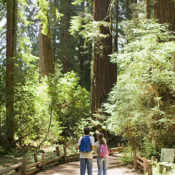 Great stands of redwoods are a main attraction in Felton, California.