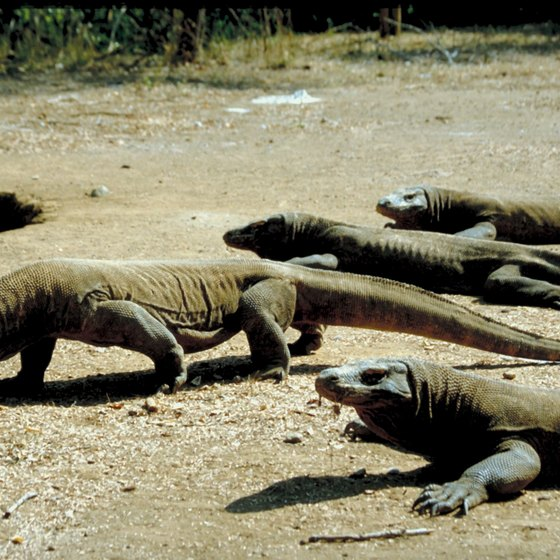 You may spot Komodo dragons near Labuan Bajo.