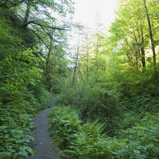 Taking a hike at Cascade Head is a perfect way to escape the bustle of Lincoln City, Oregon.
