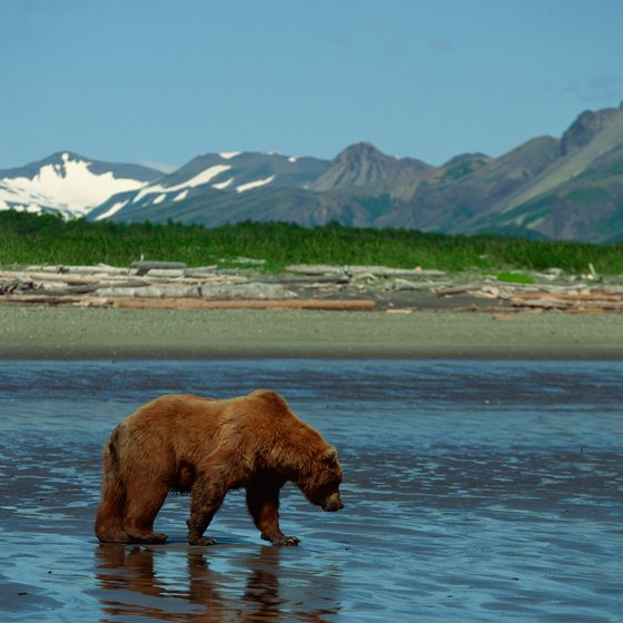 Wildlife in Alaska is plentiful during the summer months.