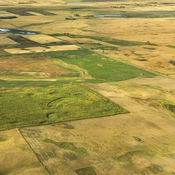 Interesting Facts About the Temperate Grassland | USA Today