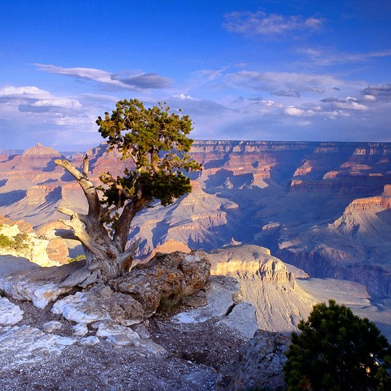 Amtrak offers several tours to the Grand Canyon.