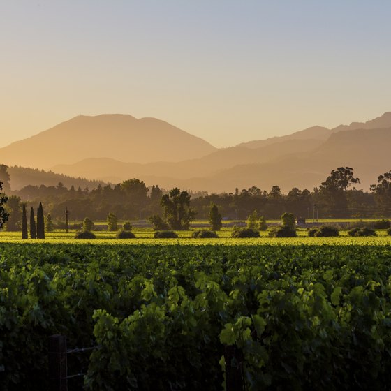 Ride Amtrak to the Napa Valley to relax and watch the scenery roll by.