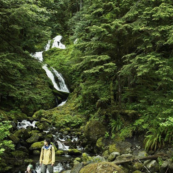 Towering trees and tumbling waterfalls in Olympic National Forest.