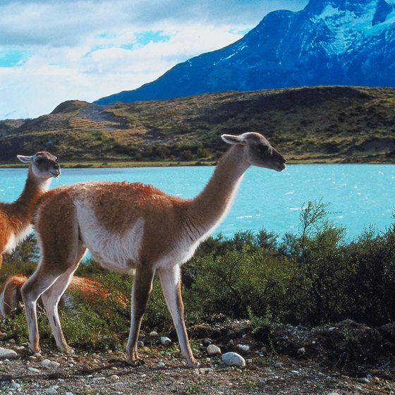 Southern Argentina's llamas and lakes are best visited in the summer.