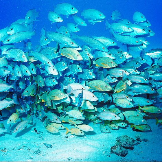 Thick schools of fish are just one of Cozumel's underwater attractions.