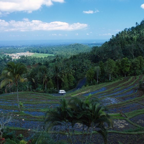 The famed terraced rice paddies of Bali