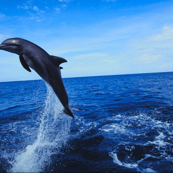 Make new marine friends on a Destin dolphin cruise.