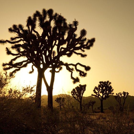 Desert Hot Springs Is On The Edge Of Joshua Tree National Park