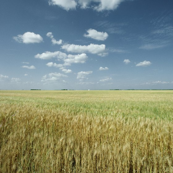A rural landscape typical of Manitoba.