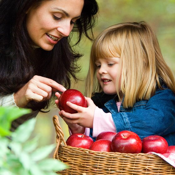 Kids can pick their own apples when they visit Saline, Michigan.