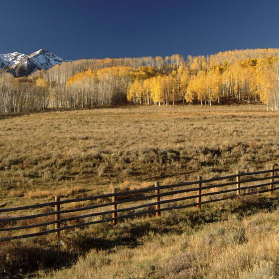 The changing aspen leaves make fall the ideal time to visit Telluride.