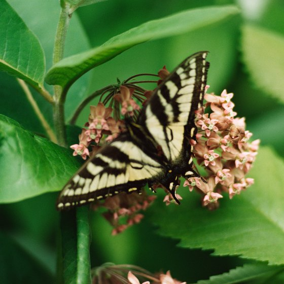 Butterfly gardens contain special plants meant to attract butterflies.