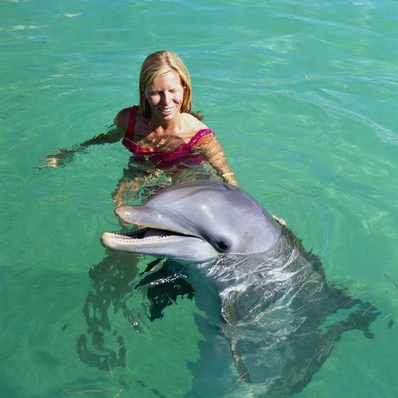 Make a dolphin friend in Florida.