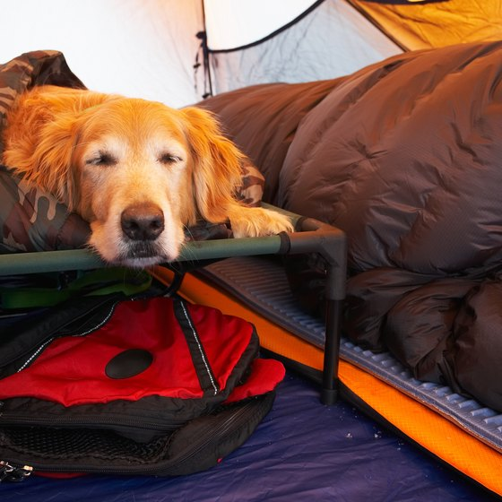 Bring along extra provisions for your dog when camping.