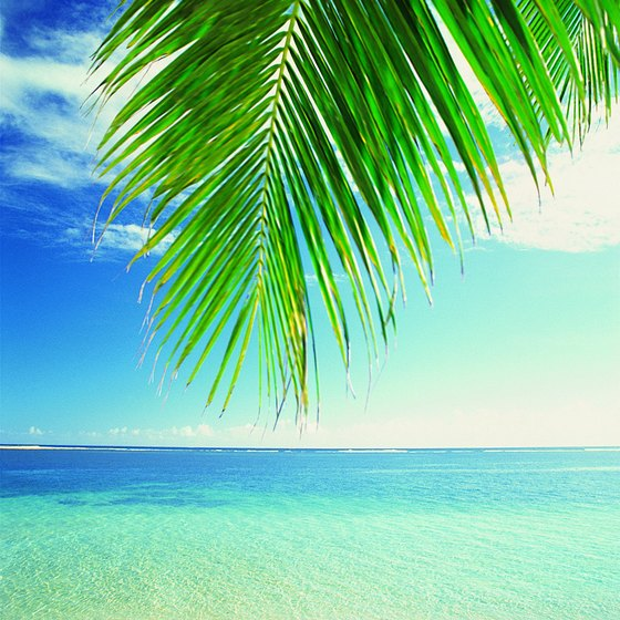 A tropical beach is a great destination for January.