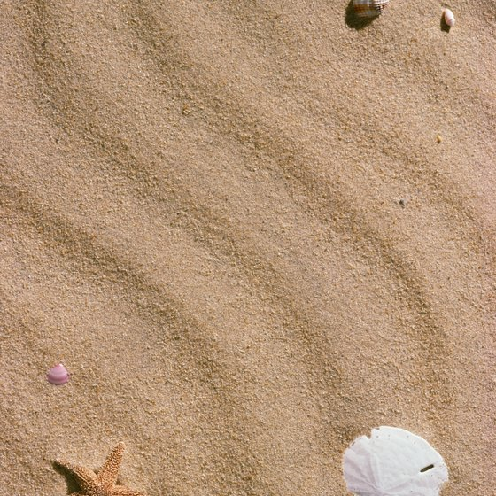 Sand dollars and sea stars dot the sand on Washington beaches.