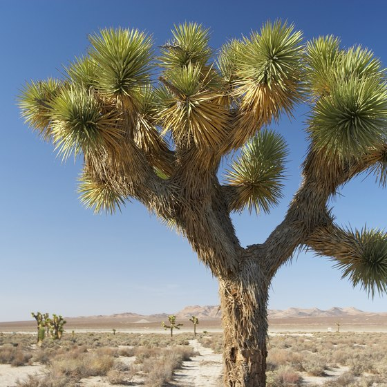 Joshua Tree National Park is just a couple of hours from Los Angeles by car.