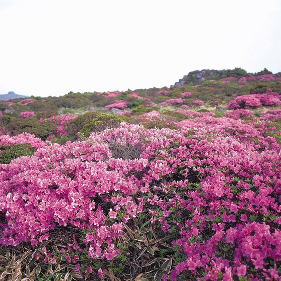 North York Moors National Park is famed for its diversity of heather.