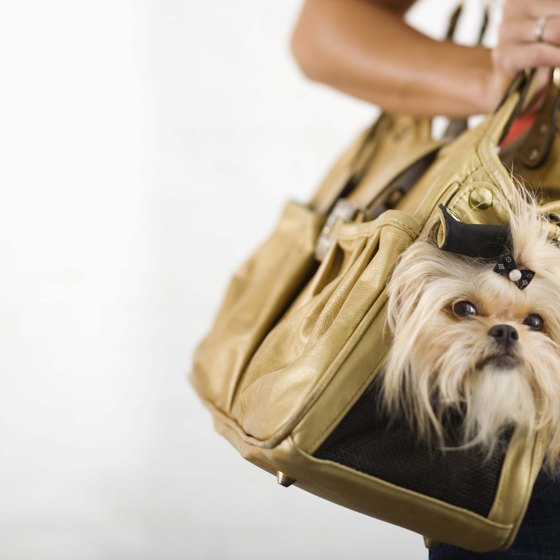 Many airlines allow small dogs to fly in carry-on carriers.
