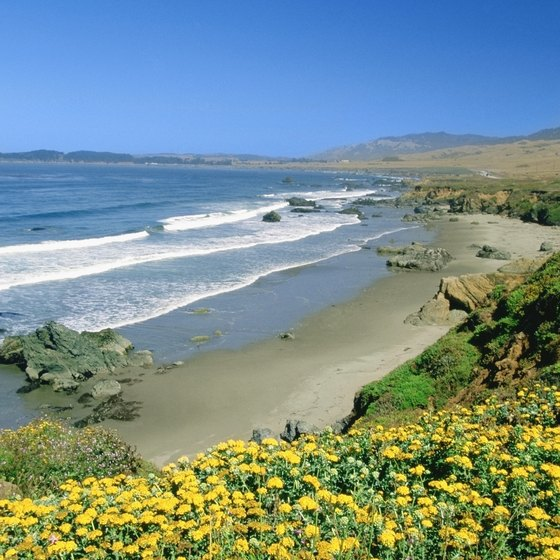 View the beach from the high cliffs of San Simeon.