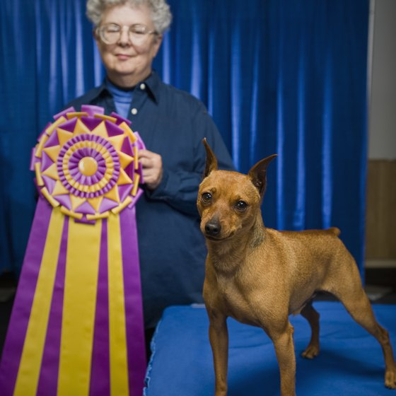 Pedigree and mixed breed dogs may compete for titles in Sampson State Park.