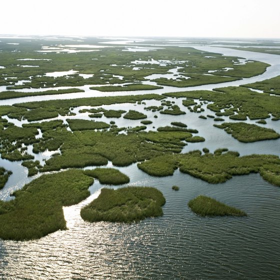 Louisiana's wetlands play an important ecological role.