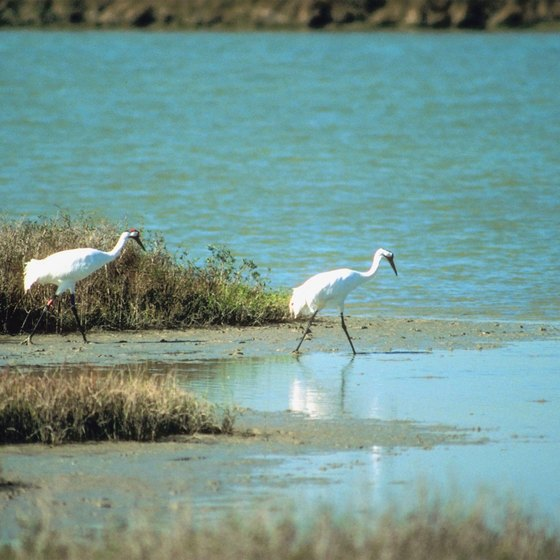 Whooping cranes are among the variety of birds that migrate to lakes near Humboldt.