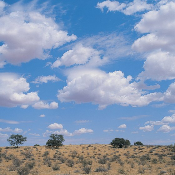 Shrubs grow in Botswana's Kalahari Desert.