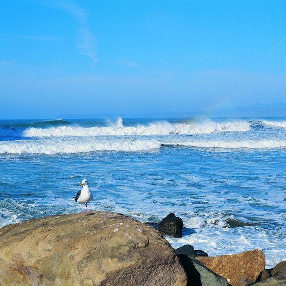 Monterey Bay's coastline provides the setting for scenic drives.