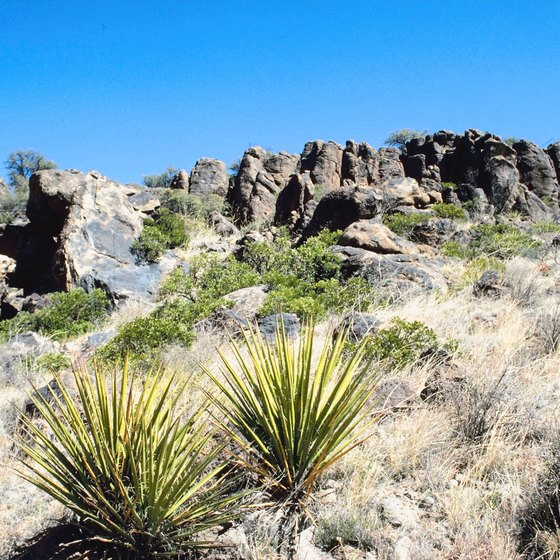 Yucca, Arizona is a desert rancher's paradise.