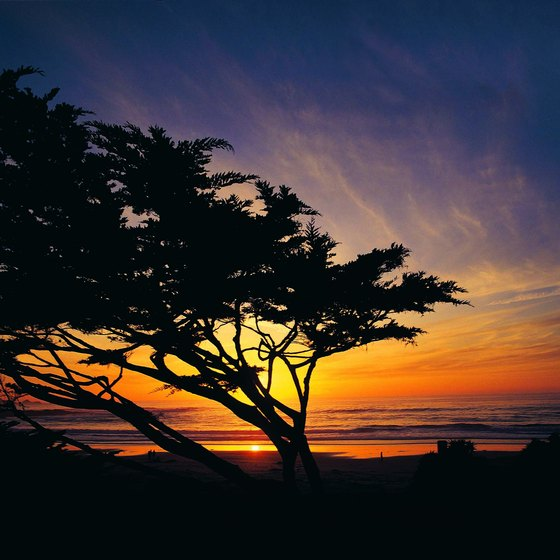 Carmel draws visitors to its combination of beach and thick forests.
