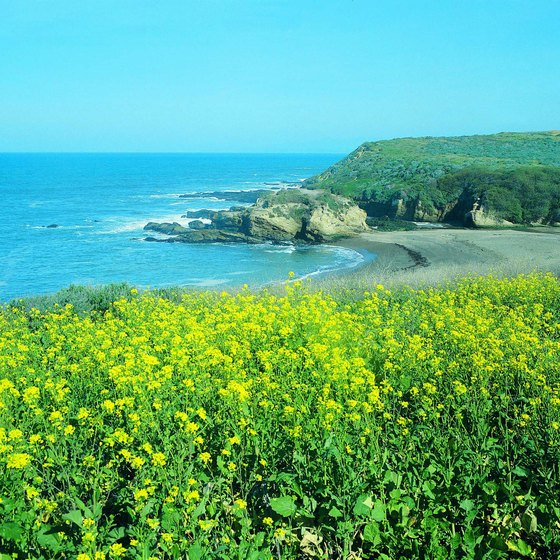 Scenic Montana de Oro is a popular place to camp and hike, just south of Morro Bay.