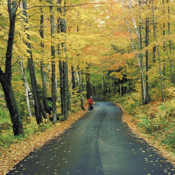 Scenic drives through the forest provide an easy way to view stunning fall foliage.