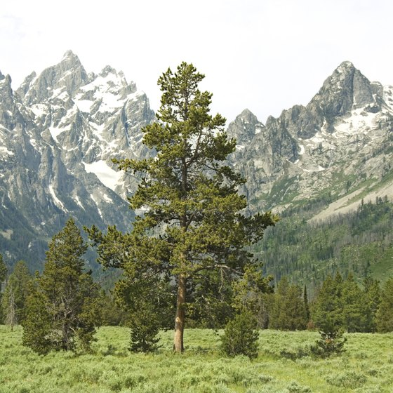 The Tetons are a jaw-droppingly scenic range of Wyoming's Middle Rockies.