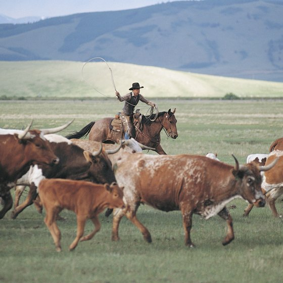 Take part in a modern-day cattle drive on your equestrian vacation.