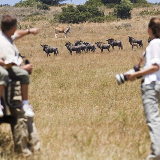 Visitors appreciate wildlife in South Africa's natural landscapes.