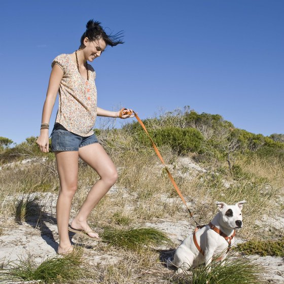 Dogs are not allowed on the beach at Beach Haven and are only allowed on nearby beaches during the off-peak season.