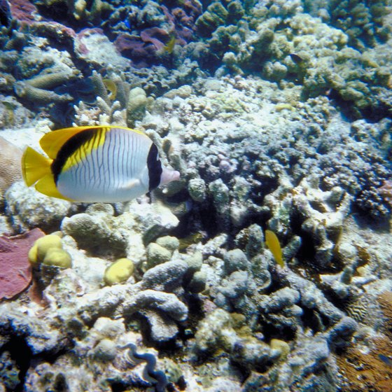 The Great Barrier Reef is home to more than 1,500 species of colorful fish.