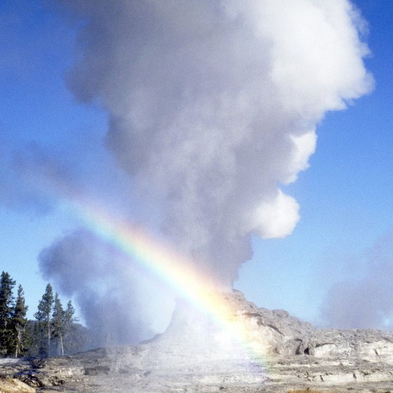 Many bus tour companies take you to see Yellowstone's Old Faithful geyser.