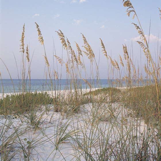 Sea oats thrive on Pensacola Beach, part of Gulf Islands National Seashore.