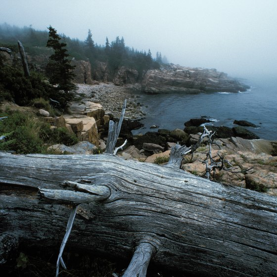 Mist and fog along the shore can make un-guided kayaking dangerous.