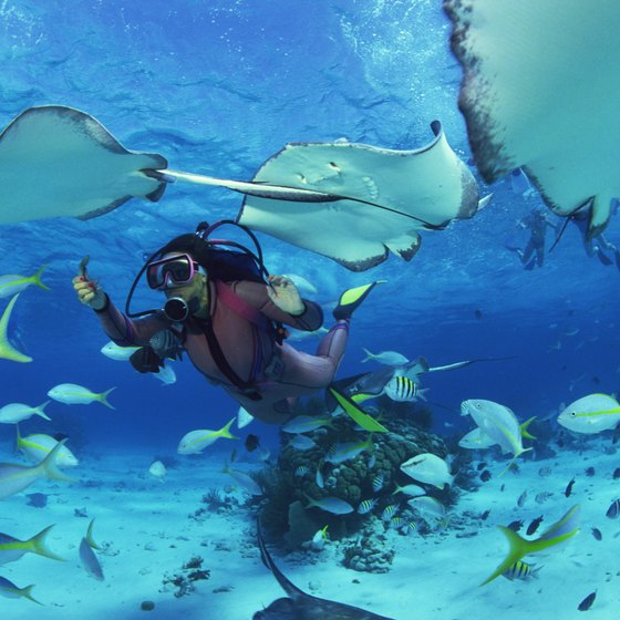 Abu Dhabi offers divers a variety of sites to observe marine life in its natural habitat.