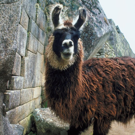 Lima, the gateway to llama-studded Peru, is worth exploring.