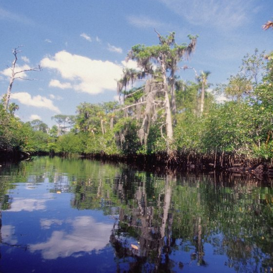 Jupiter is home to rivers, which are frequented by kayakers and fishermen.