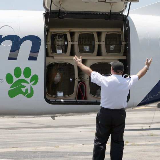 How much is an airline ticket for dogs usa today for Best airline to fly dogs