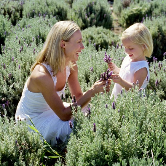 "Sequim is known as the ""Lavender Capital of North America."""
