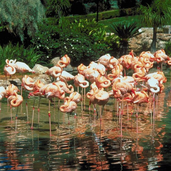 Visit the flamingo exhibit at SeaWorld San Antonio.